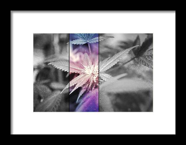 Cannabis Framed Print featuring the photograph Tye-dye Bud by Erin Hayes