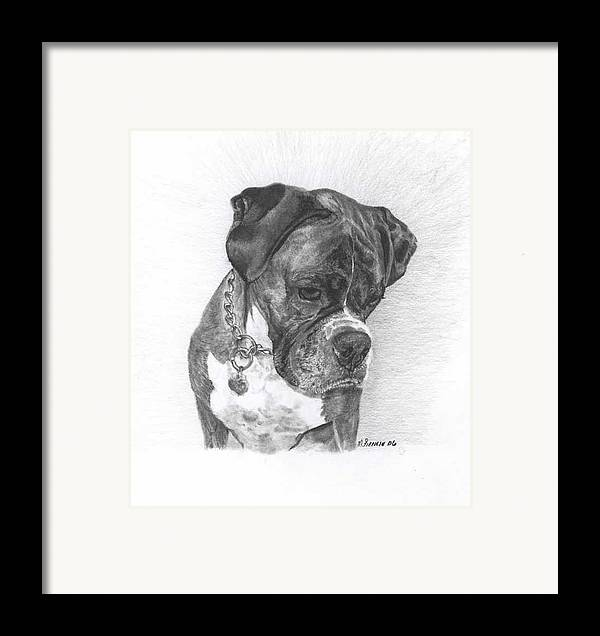 My Boxer Framed Print featuring the drawing Tyson by Marlene Piccolin