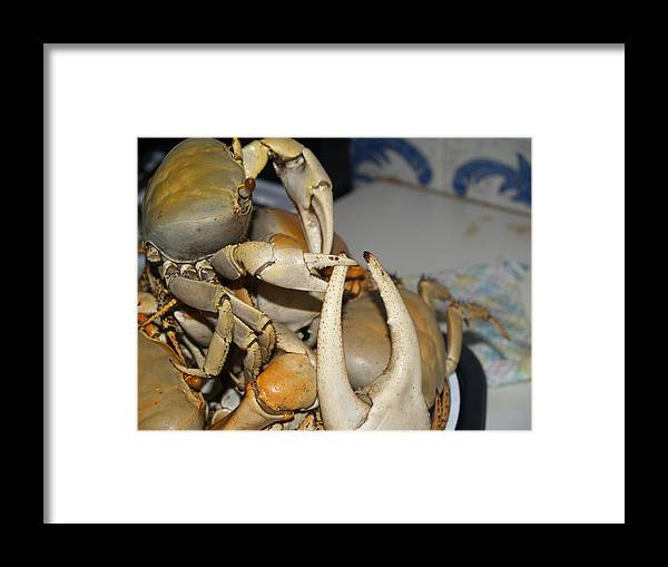 Crabs Framed Print featuring the photograph U Bigger... I Smaller... I Still Better by Calli L
