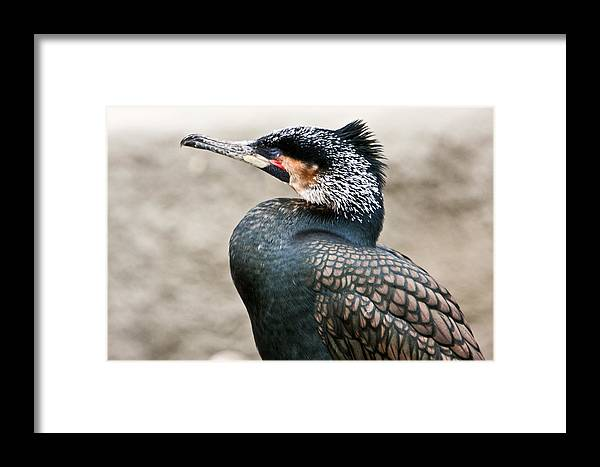 Ugly Framed Print featuring the photograph Ugly Bird by Douglas Barnett
