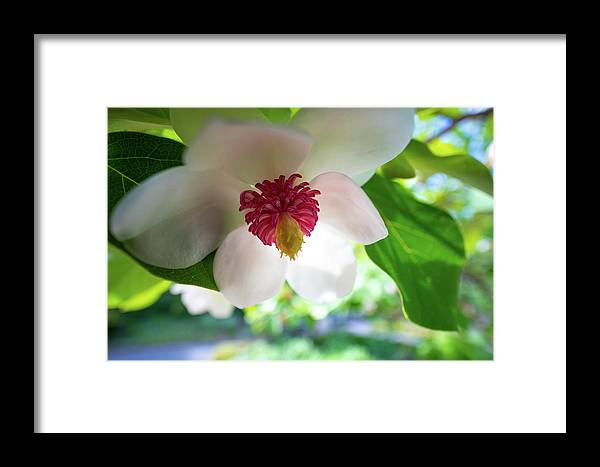 Flower Flowers Botanical Botany Macro Closeup Close-up Close Up Ma Mass Massachusetts Newengland New England Framed Print featuring the photograph Under Flower by Brian Hale