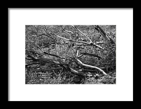 Landscape Framed Print featuring the photograph Under The Charred Laurel Sumac by Greg Clure