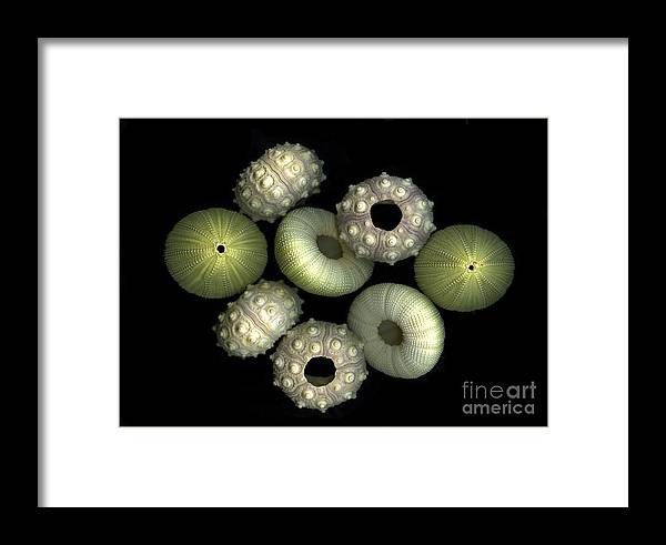 Sea Framed Print featuring the photograph Under The Sea by Christian Slanec