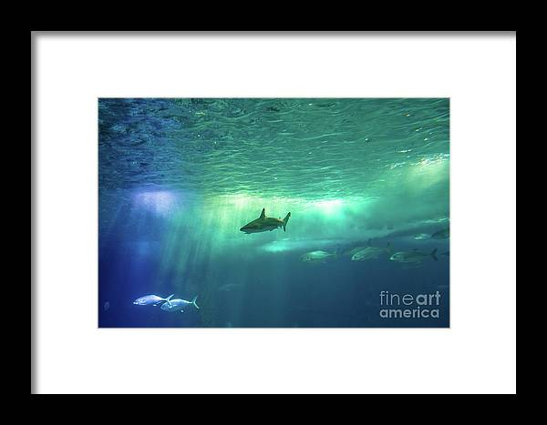 Underwater Framed Print featuring the photograph Undersea Scene Background by Benny Marty