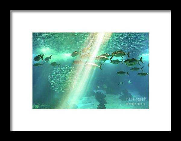 Underwater Framed Print featuring the photograph Underwater Background With Sunbeams by Benny Marty