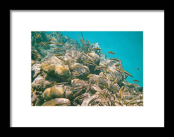 Underwater Photography Framed Print featuring the painting Underwater Photography by John Malone