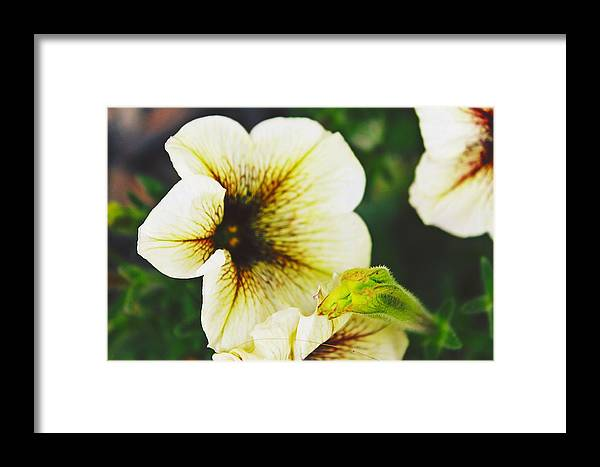 Flower Framed Print featuring the photograph Unique Bloom by Amelia Saldarriaga