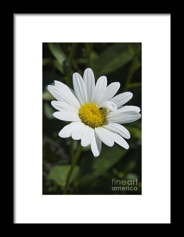 White Flower Framed Print featuring the photograph Unique by Madelin Zaycheck