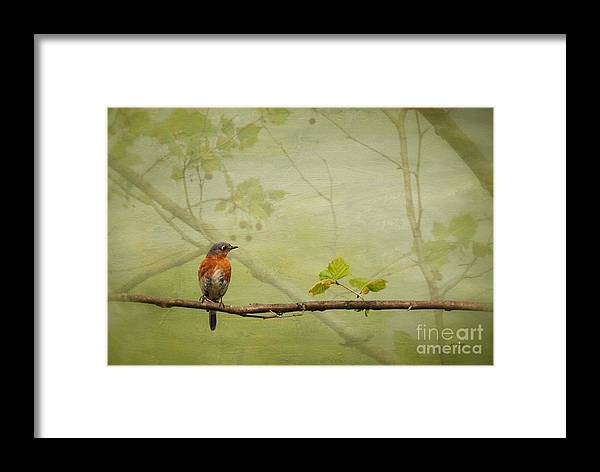 Bluebirds Framed Print featuring the photograph Until Spring by Lois Bryan