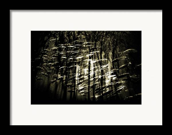 Digital Photography Framed Print featuring the photograph Untitled 2 by Tony Wood