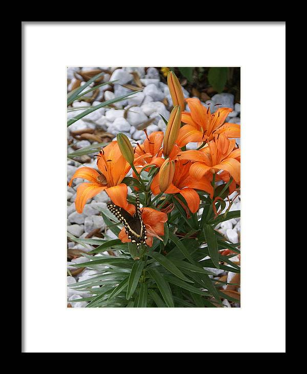 Flower Framed Print featuring the photograph Untitled by Debbie May