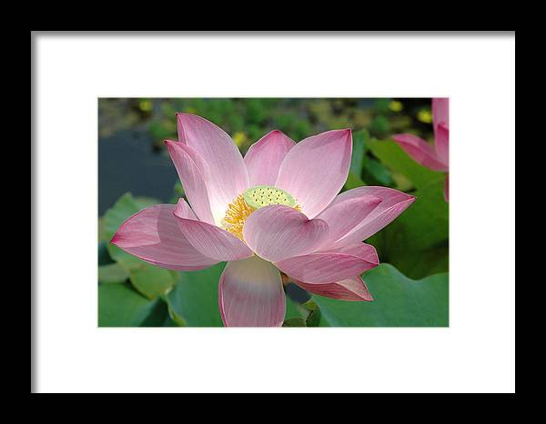 Flower Framed Print featuring the photograph Untitled by Kathy Schumann