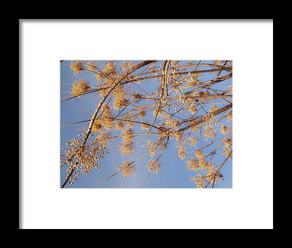 Tree Framed Print featuring the photograph Untitled by Sallye Wilkinson