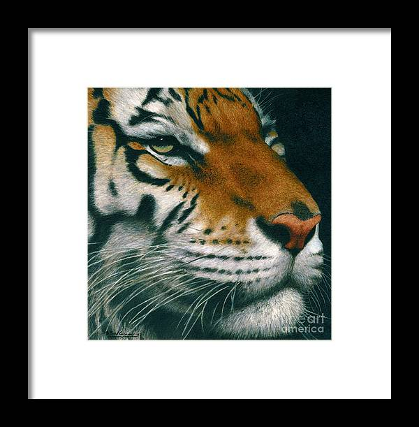 Tiger Framed Print featuring the painting Untitled Tiger by Brad Carraway