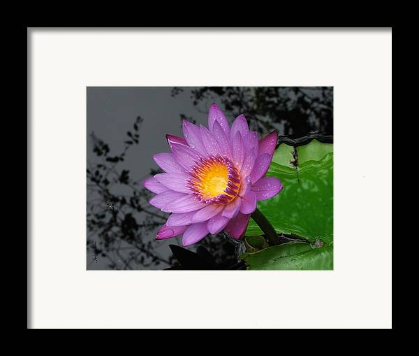 Rain Framed Print featuring the photograph Untouched by Judy Waller