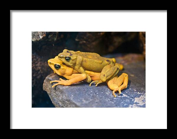 Frogs Framed Print featuring the photograph Up Close And Personal by Douglas Barnett