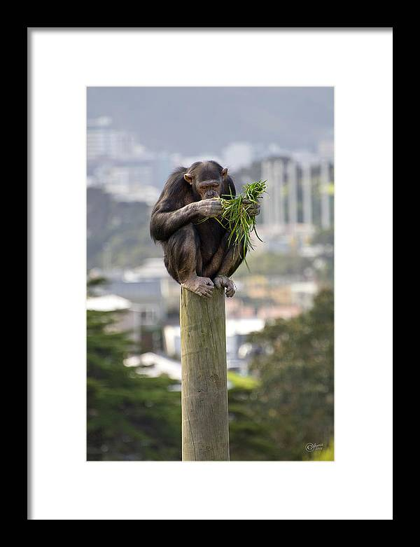 Zoo Framed Print featuring the photograph Urban Jungle by Andrea Cadwallader