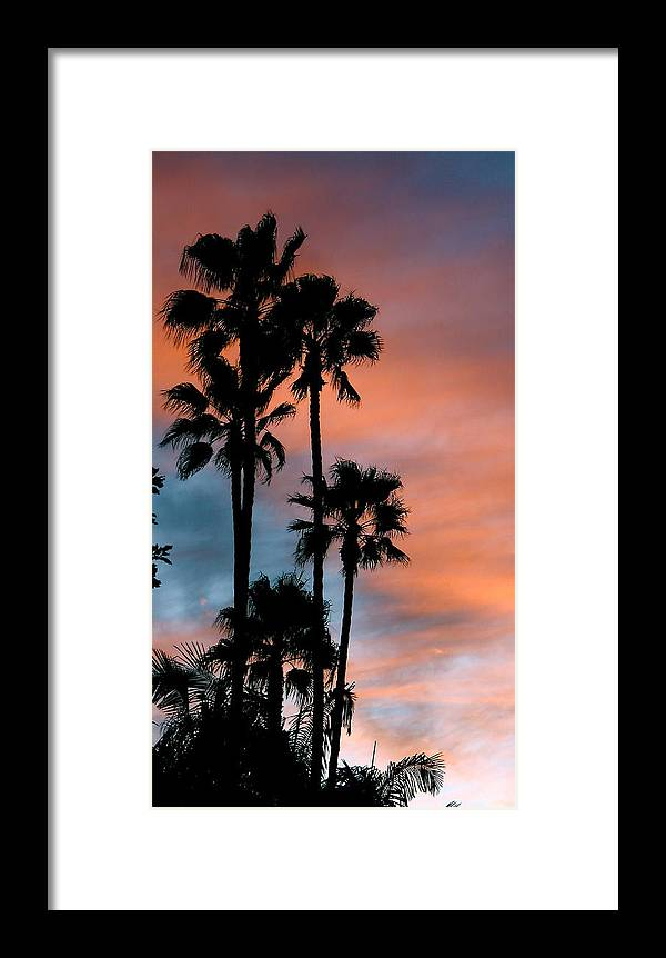 Palm Tree Framed Print featuring the photograph Urban Palms by Peter Breaux