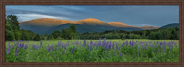 Valley Way Lupine Sunset by Chris Whiton