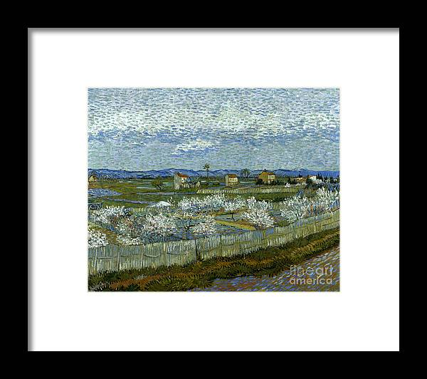 1889 Framed Print featuring the photograph Van Gogh: Peach Tree, 1889 by Granger