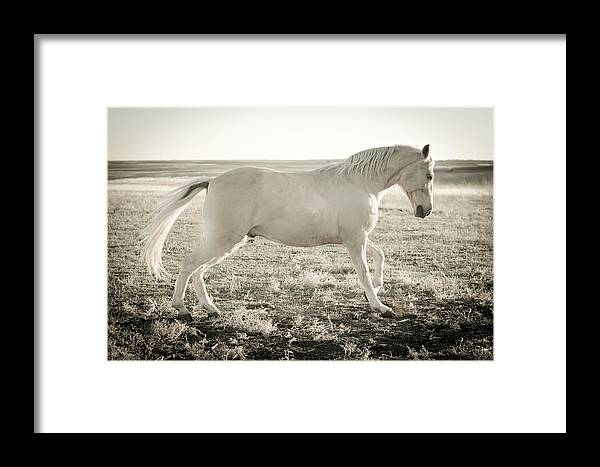 Horse Framed Print featuring the photograph Vanilla Walker by Trish Kusal