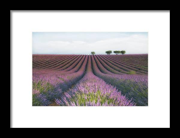 Landscape Framed Print featuring the photograph Velours De Lavender by Margarita Chernilova
