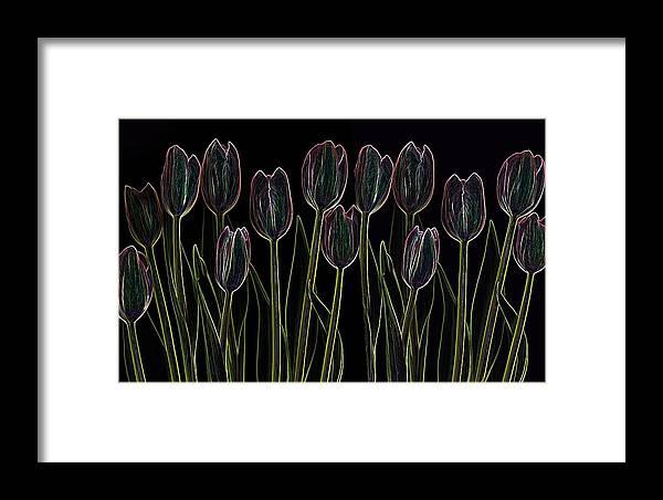 Scanography Framed Print featuring the digital art Velvet Tulips by Deborah J Humphries