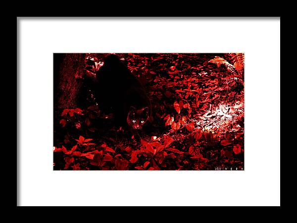 Cat Framed Print featuring the photograph Very by Jonathan Ellis Keys