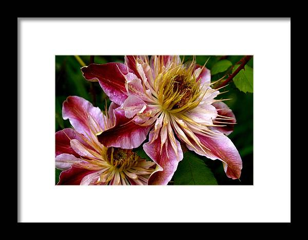 Flowers Framed Print featuring the photograph Vibrant Lillies by Sonja Anderson