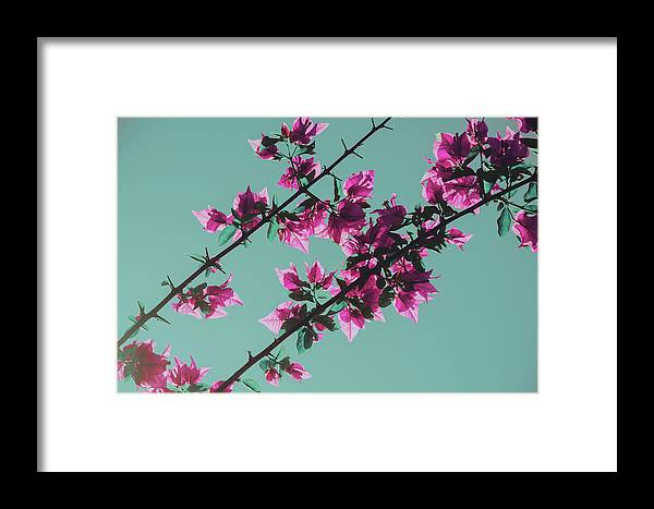Backdrop Framed Print featuring the photograph Vibrant Pink Flowers Bloom Floral Background by Srdjan Kirtic
