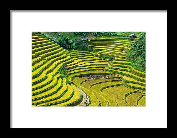 Rice Terraces In Harvest Time Framed Print featuring the photograph Vietnam Rice Terraces by Dong Bui