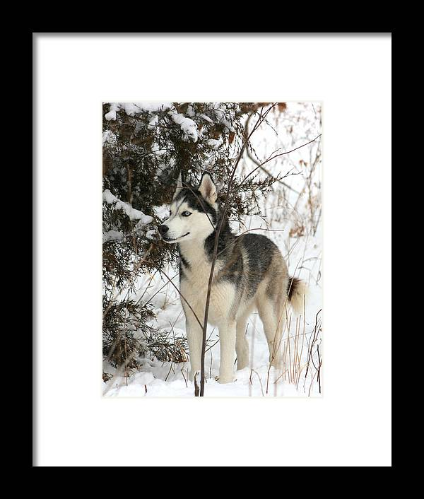Animal Framed Print featuring the photograph Vigilant by David Dunham