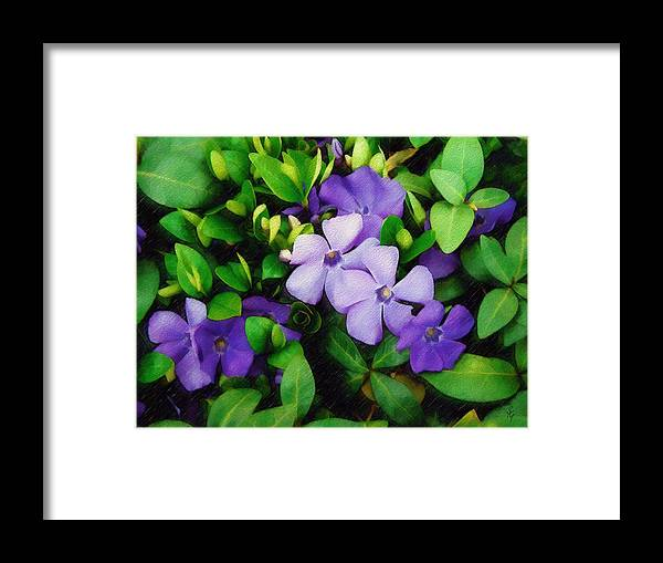 Vinca Framed Print featuring the photograph Vinca by Sandy MacGowan