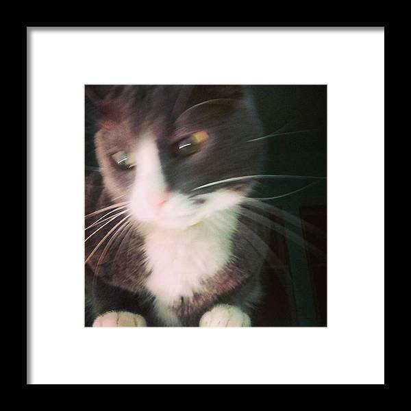 Capture Framed Print featuring the photograph Vincent And His Magnificent Whiskers by Genevieve Esson