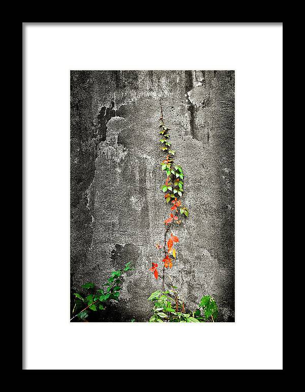 Autumn Framed Print featuring the photograph Vine In Autumn by Brian DeWolf