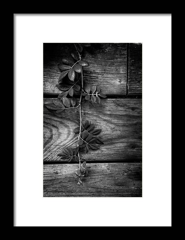 Barn Framed Print featuring the photograph Vine On Barn by Greg Mimbs
