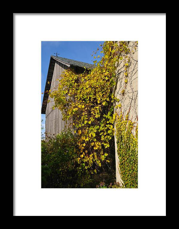 Silo Framed Print featuring the photograph Vined Silo by Tim Nyberg