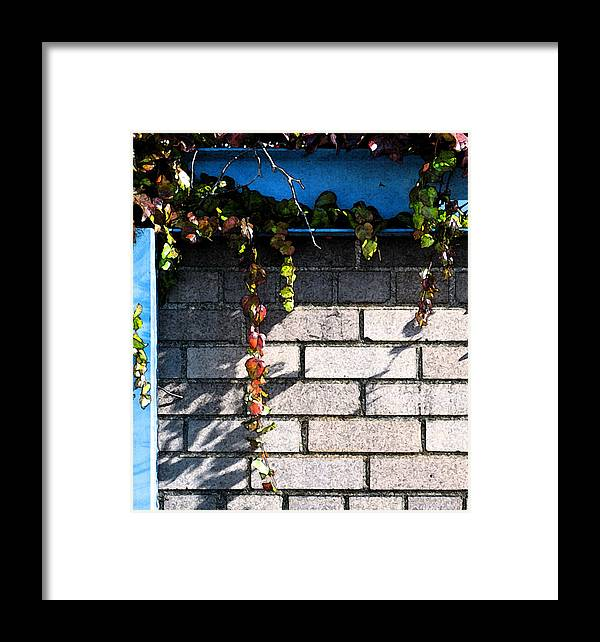 Vines Framed Print featuring the photograph Vines On Blue by Gary Everson