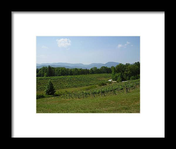 Vineyard Framed Print featuring the photograph Vineyard by Flavia Westerwelle