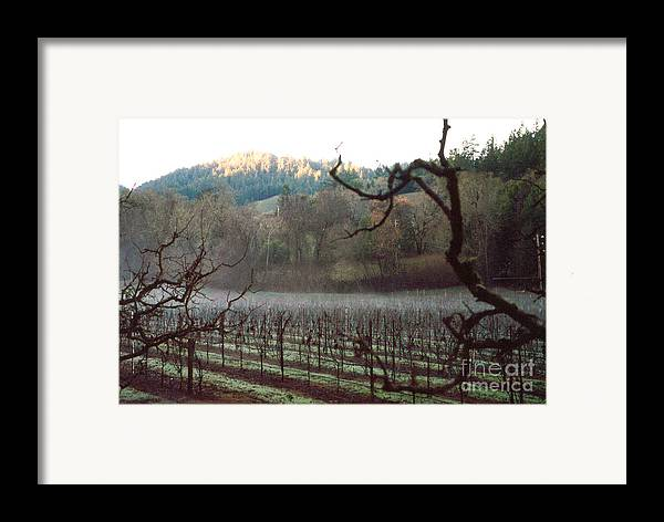Vineyard Framed Print featuring the photograph Vineyard In The Winter by PJ Cloud