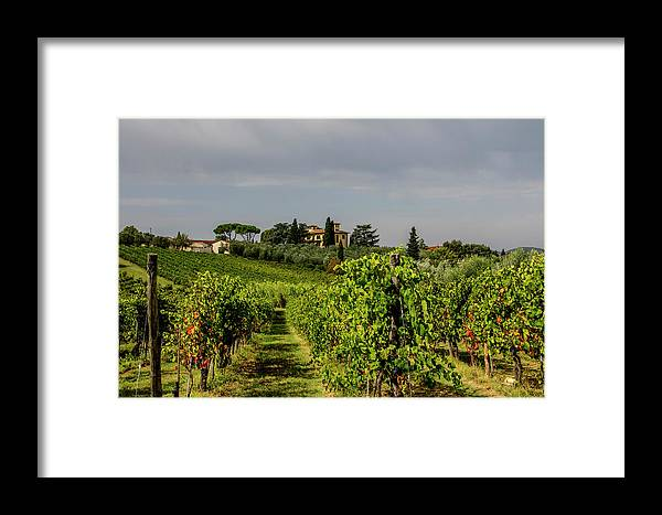 Vineyard Framed Print featuring the photograph Vineyard View by Jean Haynes