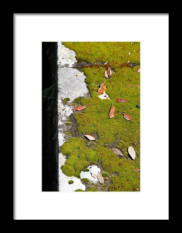 Vintage Framed Print featuring the photograph Vintage Moss by Valentino Visentini