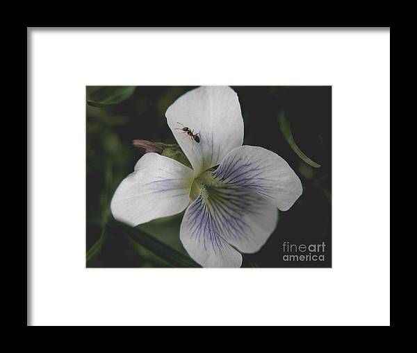 Violet Framed Print featuring the photograph Viol-ant by Michelle Hastings