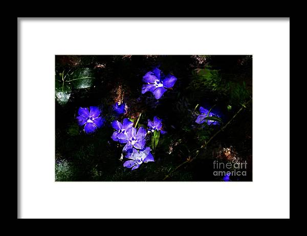Spring Framed Print featuring the photograph Violet by David Lane