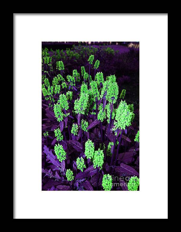 Framed Print featuring the photograph Violet Dream On Green by Jamie Lynn