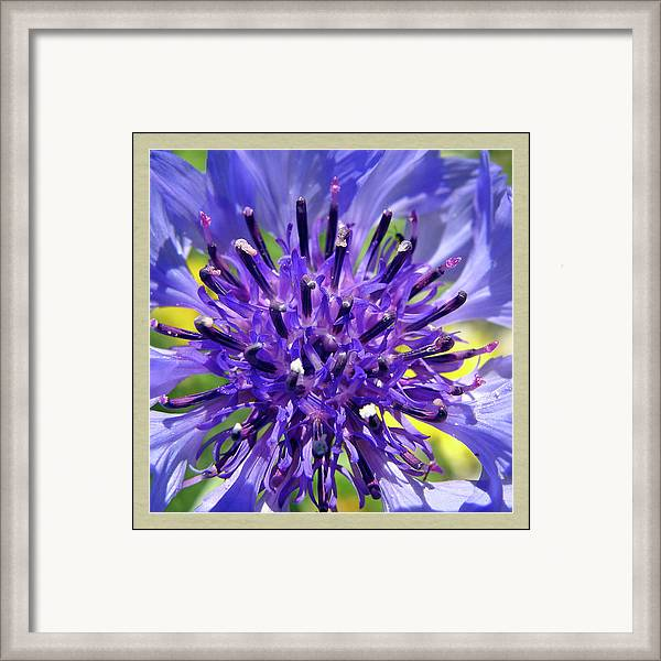 Framed Print featuring the photograph Violet Yellow Green by M Urbanski