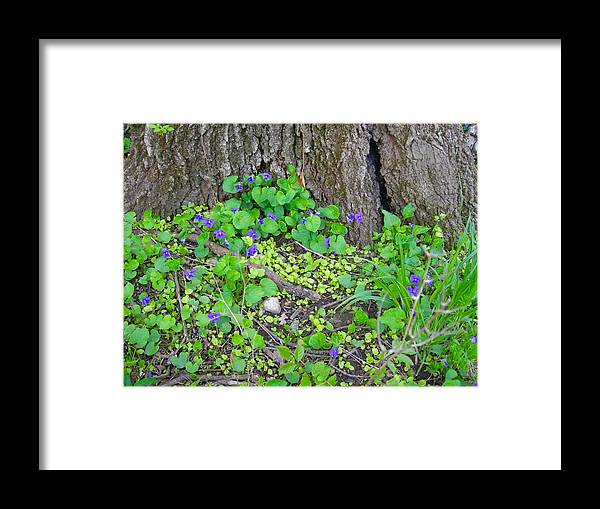 Violets Framed Print featuring the photograph Violets by Beth Tidd