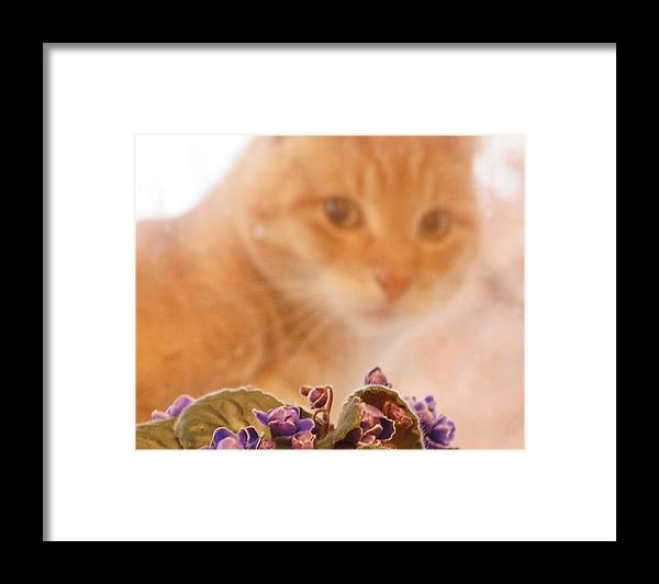 Orange Tabby Cat Framed Print featuring the digital art Violets with Cat by Jana Russon