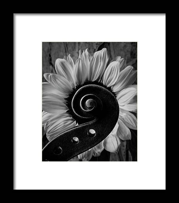 One Framed Print featuring the photograph Violin Scroll And Sunflower In Black And White by Garry Gay