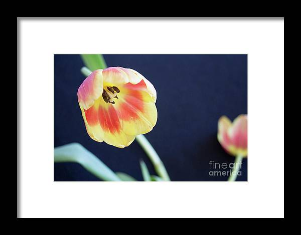 Flower Framed Print featuring the photograph Virgin Beauty by Michael Rados